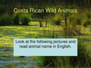Costa Rican Wild Animals.