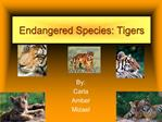 Endangered Species: Tigers