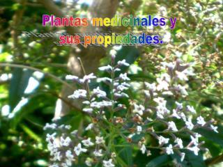 Plantas medicinales y  sus propiedades.