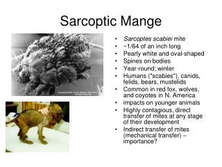 Sarcoptic Mange