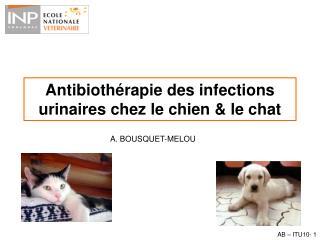 Antibiothérapie des infections urinaires chez le chien & le chat