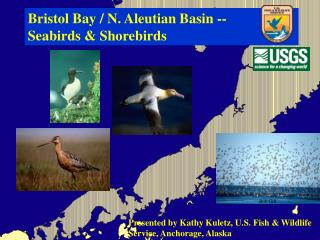 Bristol Bay / N. Aleutian Basin --   Seabirds & Shorebirds