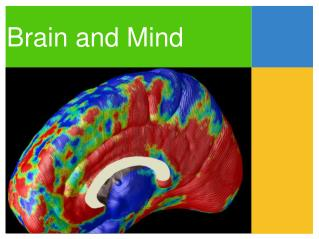 Brain and Mind