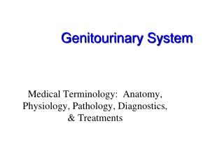 Genitourinary System