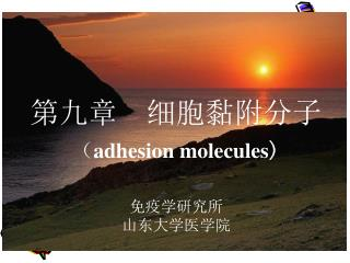 第九章  细胞黏附分子 ( adhesion molecules )