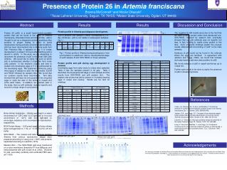 Presence of Protein 26 in  Artemia franciscana Brenna McConnell 1  and Nicole Okazaki 2