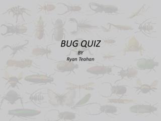 BUG QUIZ BY Ryan  Teahan