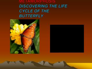 METAMORPHOSIS  DISCOVERING THE LIFE CYCLE OF THE BUTTERFLY