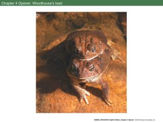 Chapter 4 Opener: Woodhouse's toad