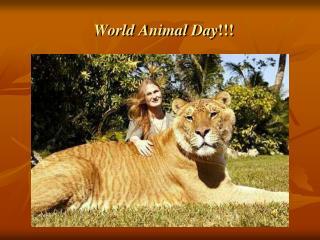 World Animal Day !!!
