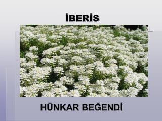 İBERİS