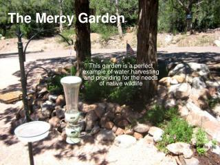 The Mercy Garden