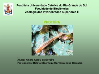 Aluna: Amara Abreu da Silveira Professores: Betina Blochtein; Gervásio Silva Carvalho