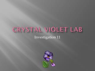 Crystal Violet Lab
