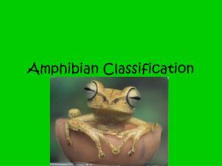 Amphibian Classification