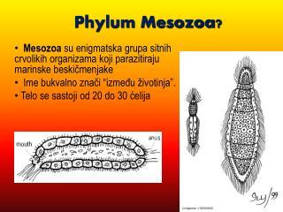Phylum Mesozoa ?