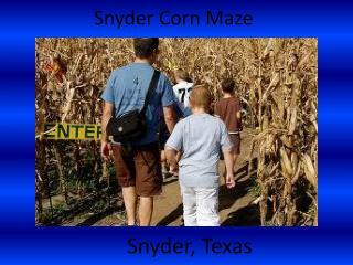 Snyder Corn Maze