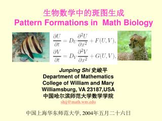 生物数学中的斑图生成 Pattern Formations in   Math Biology