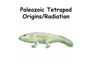 Paleozoic Tetrapod Origins/Radiation