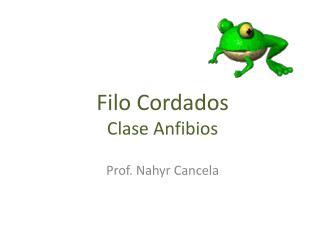 Filo Cordados  Clase Anfibios
