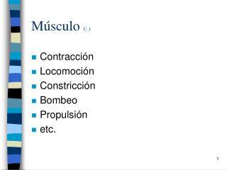 Músculo  ( L )