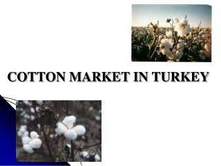 COTTON MARKET IN TURKEY