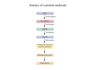 Journey of a protein molecule