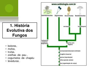 1. História Evolutiva dos Fungos