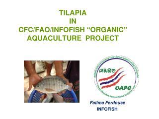 TILAPIA  IN  CFC