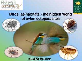 Birds, as habitats - the hidden world of avian ectoparasites