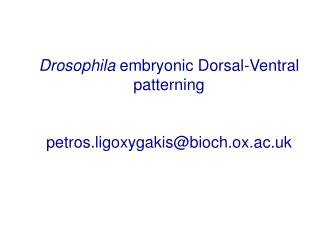 Drosophila  embryonic Dorsal-Ventral patterning petros.ligoxygakis@bioch.ox.ac.uk
