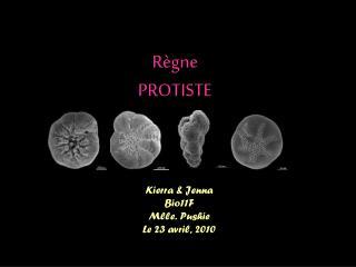 Règne PROTISTE