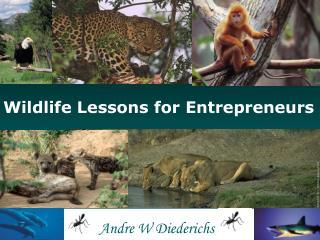 Wildlife Lessons for Entrepreneurs