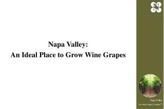 Napa Valley: An Ideal Place to Grow Wine Grapes