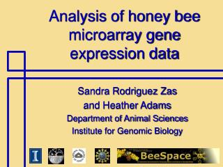 Analysis of honey bee microarray gene expression data