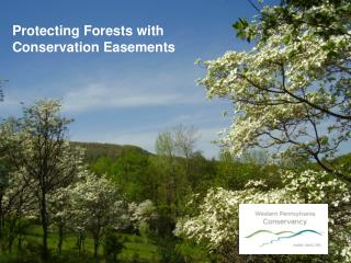 Protecting Forests with Conservation Easements