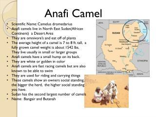 Anafi Camel