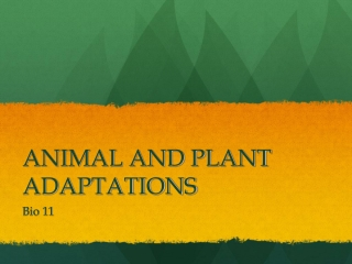 What are the Adaptations of Animals in the Desert