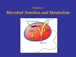 Chapter 6 Microbial Nutrition and Metabolism
