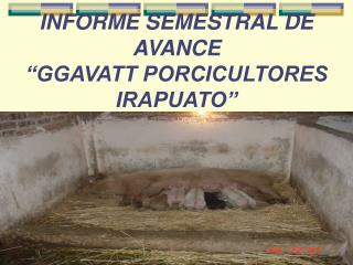 INFORME SEMESTRAL DE AVANCE  �GGAVATT PORCICULTORES IRAPUATO�