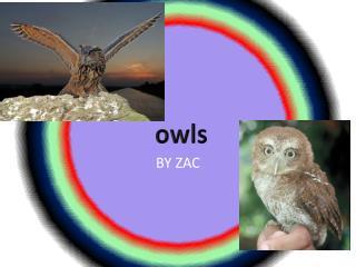 BY ZAC