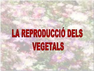 LA REPRODUCCIÓ DELS  VEGETALS