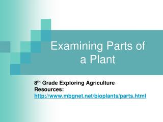 Examining Parts of a Plant