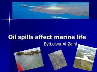 Oil spills affect marine life