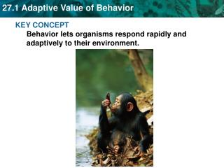 KEY CONCEPT  Behavior lets organisms respond rapidly and adaptively to their environment.