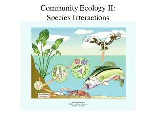 Community Ecology II:  Species Interactions