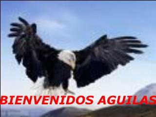 BIENVENIDOS AGUILAS