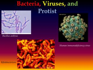 Bacteria , Viruses,  and Protist