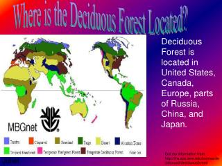 Where is the Deciduous Forest Located?