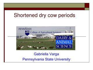 Shortened dry cow periods